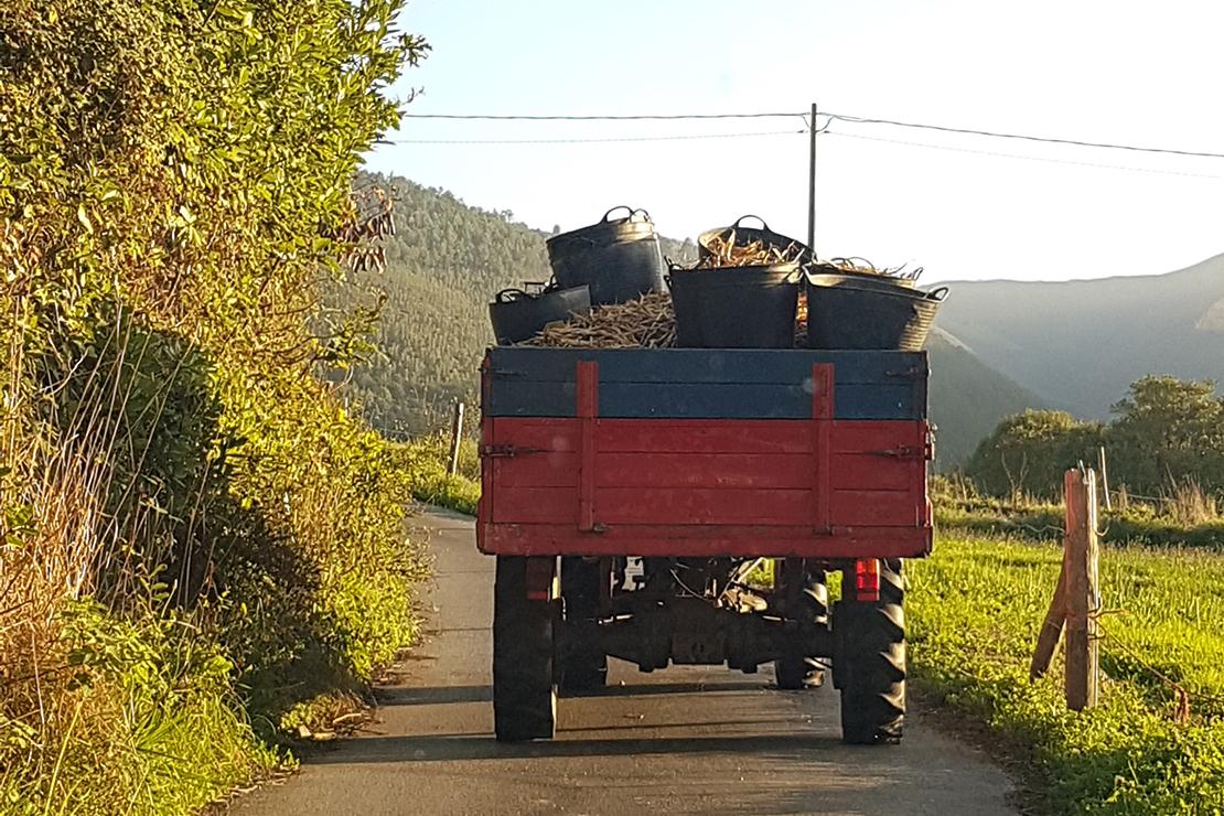 Faba Asturiana Igp El Ribeiro Asturias